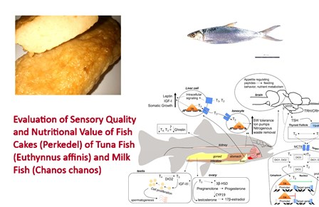 1400-15_-_Sensory_Quality_of_Fish_Cakes_Tuna__Milk_Fish